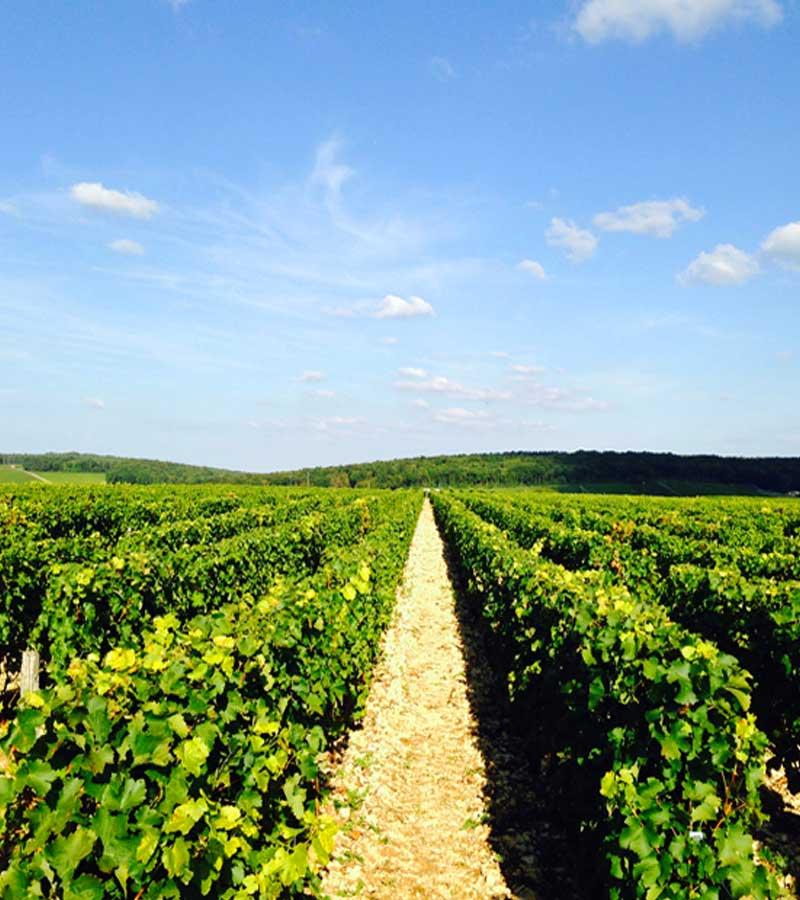 hotel route des vins